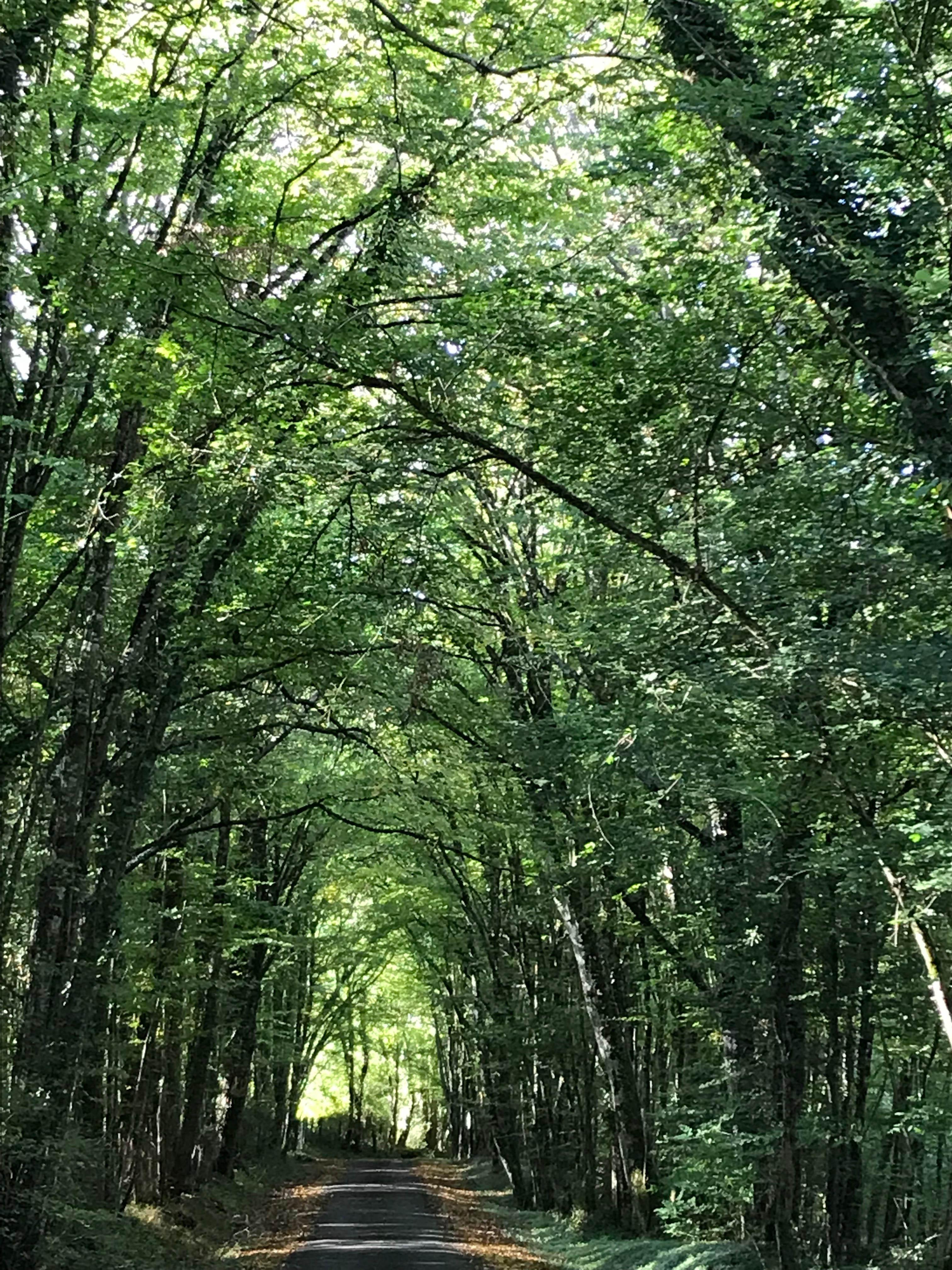 Lorsque vous tournez direction La Robichère. Route dans la forêt. 1km au bout de la route